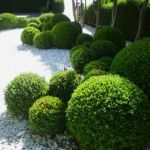 Fascinating Evergreen Pleached Trees for Outdoor Landscaping 60