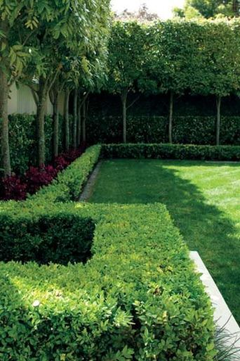 Fascinating Evergreen Pleached Trees for Outdoor Landscaping 69