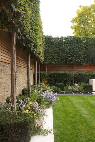 Fascinating Evergreen Pleached Trees for Outdoor Landscaping 73