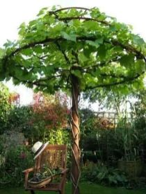 20 Awesome Tips to Growing Grape in Your Home Backyard ...