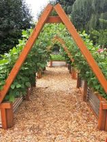 20 Awesome Tips and Ideas to Grow Grape in Your Home Backyard 7