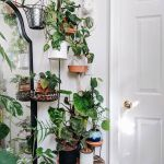 Amazing Indoor Jungle Decorations Tips and Ideas 13