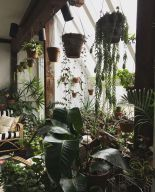 Amazing Indoor Jungle Decorations Tips and Ideas 20