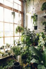 Amazing Indoor Jungle Decorations Tips and Ideas 24