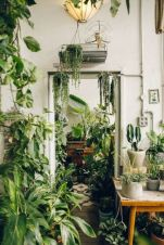 Amazing Indoor Jungle Decorations Tips and Ideas 25