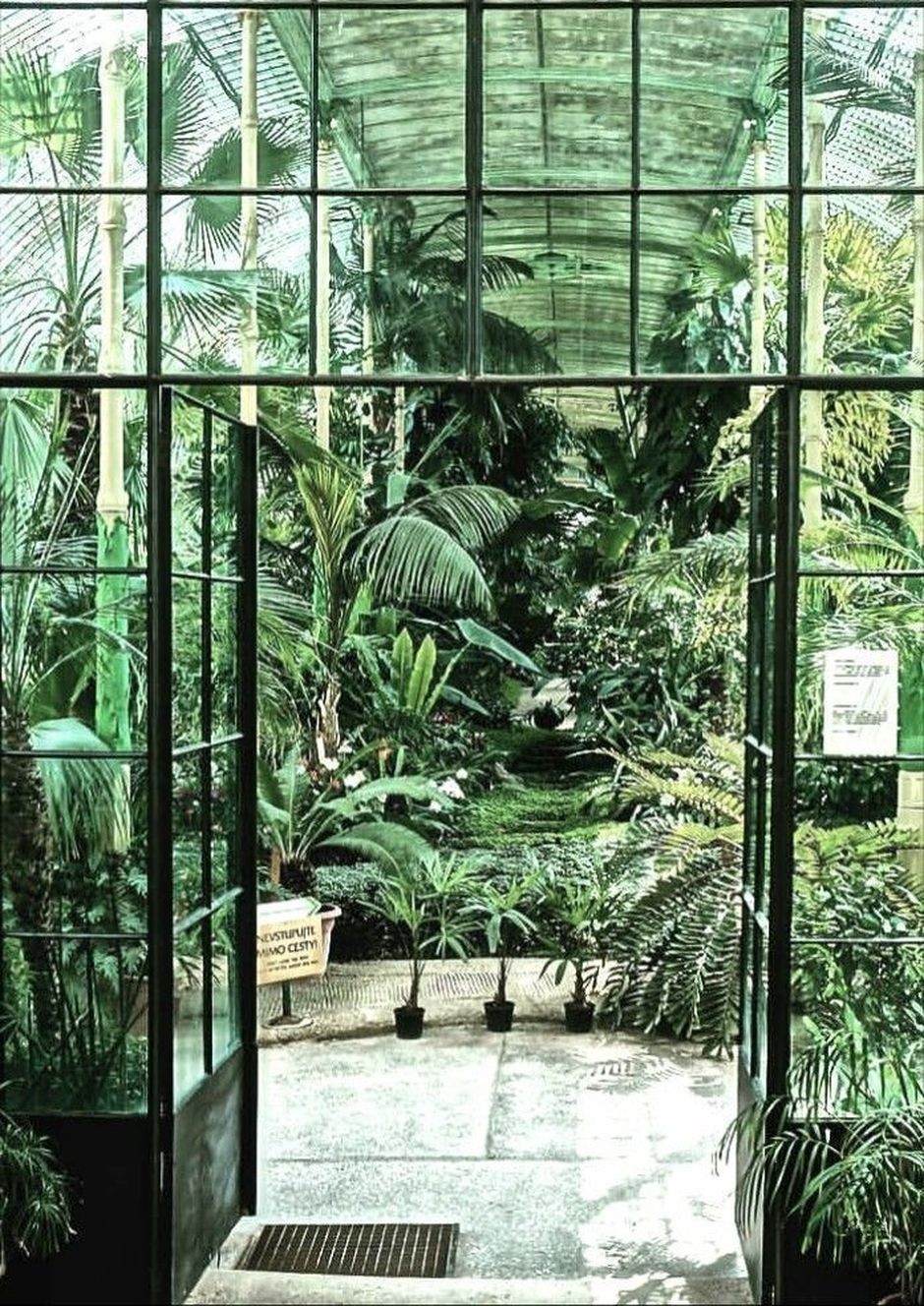 Interior Design Jungle Room