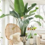 Amazing Indoor Jungle Decorations Tips and Ideas 38