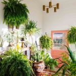Amazing Indoor Jungle Decorations Tips and Ideas 39