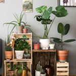 Amazing Indoor Jungle Decorations Tips and Ideas 49