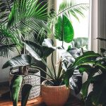 Amazing Indoor Jungle Decorations Tips and Ideas 55
