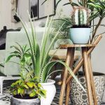 Amazing Indoor Jungle Decorations Tips and Ideas 65