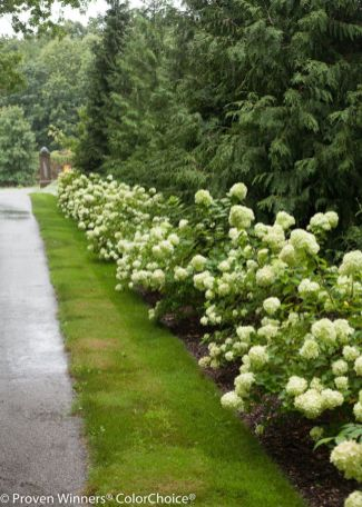 Colorful Landscaping with Low Maintenace Flower Bushes 29