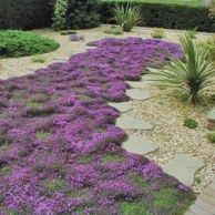Colorful Landscaping with Low Maintenace Flower Bushes 3
