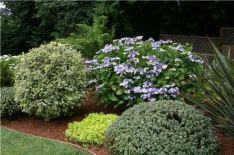 Colorful Landscaping with Low Maintenace Flower Bushes 38