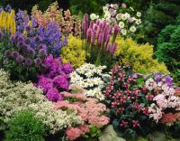 Colorful Landscaping with Low Maintenace Flower Bushes 42