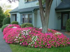Colorful Landscaping with Low Maintenace Flower Bushes 5