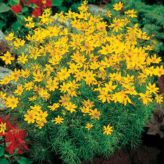 Colorful Landscaping with Low Maintenace Flower Bushes 50