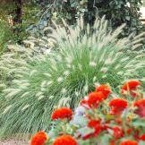 Colorful Landscaping with Low Maintenace Flower Bushes 59