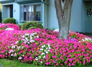 Colorful Landscaping with Low Maintenace Flower Bushes
