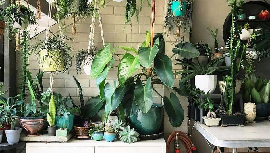 70 amazing home indoor jungle decorations tips and ideas hoommy com