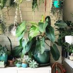 Indoor Jungle Decorations Tips and Ideas