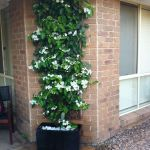Marvelous Indoor Vines and Climbing Plants Decorations 10