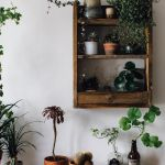 Marvelous Indoor Vines and Climbing Plants Decorations 14
