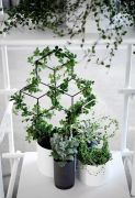 Marvelous Indoor Vines and Climbing Plants Decorations 2
