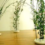 Marvelous Indoor Vines and Climbing Plants Decorations 23