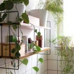Marvelous Indoor Vines and Climbing Plants Decorations 24