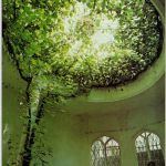 Marvelous Indoor Vines and Climbing Plants Decorations 51