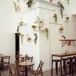 Marvelous Indoor Vines and Climbing Plants Decorations 6