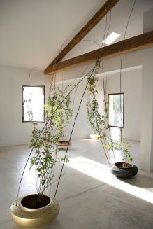 Marvelous Indoor Vines and Climbing Plants Decorations 63