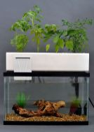 Mini Aquaponics with Fish for Home Decorations 11