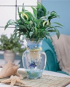 Mini Aquaponics with Fish for Home Decorations 14