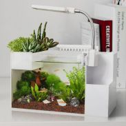 Mini Aquaponics with Fish for Home Decorations 18
