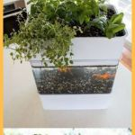 Mini Aquaponics with Fish for Home Decorations 24