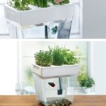 Mini Aquaponics with Fish for Home Decorations 30