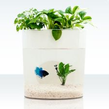 Mini Aquaponics with Fish for Home Decorations 31