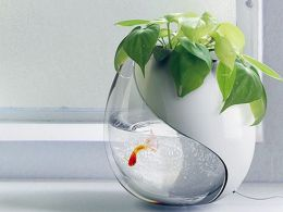 Mini Aquaponics with Fish for Home Decorations