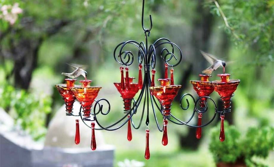 outdoor perky bird pdp strawberry feeder reviews hummingbird humming ca pet wayfair