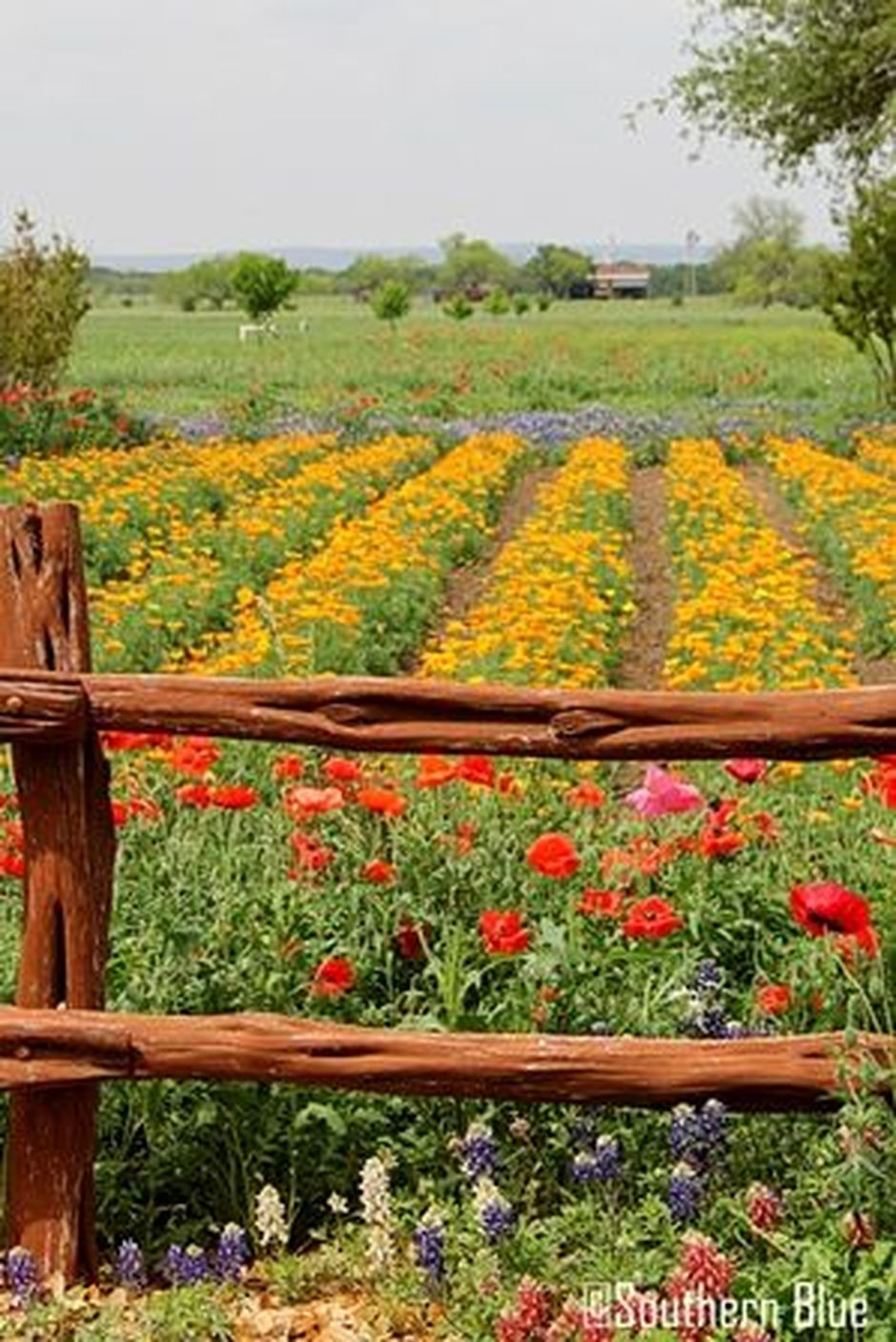 Beauty Flower Farm Which Will Make You Want to Have It 2