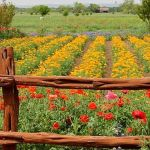Beauty Flower Farm Which Will Make You Want to Have It 1