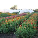 Beauty Flower Farm Which Will Make You Want to Have It 17