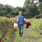 Beauty Flower Farm Which Will Make You Want to Have It 18