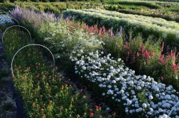 Beauty Flower Farm Which Will Make You Want to Have It 25