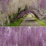 Beauty Flower Farm Which Will Make You Want to Have It 7