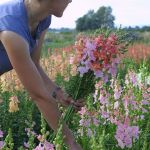 Beauty Flower Farm Which Will Make You Want to Have It 8