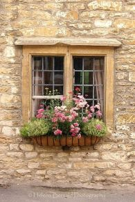 Perfect Shade Plants for Windows Boxes 29