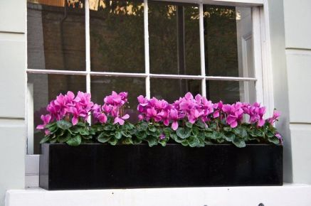 Perfect Shade Plants for Windows Boxes 30